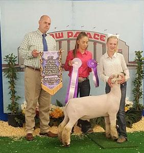 Pagliaro - Bohan Club Lambs: Diamond Downs